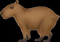 :capybara: